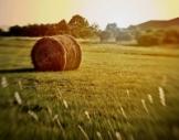 hay sunshine